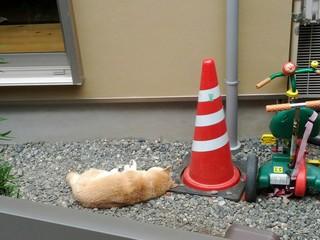 23. 山根2.「ぼくは犬それとも猫?」:横浜市・日本:面白い部門.jpg